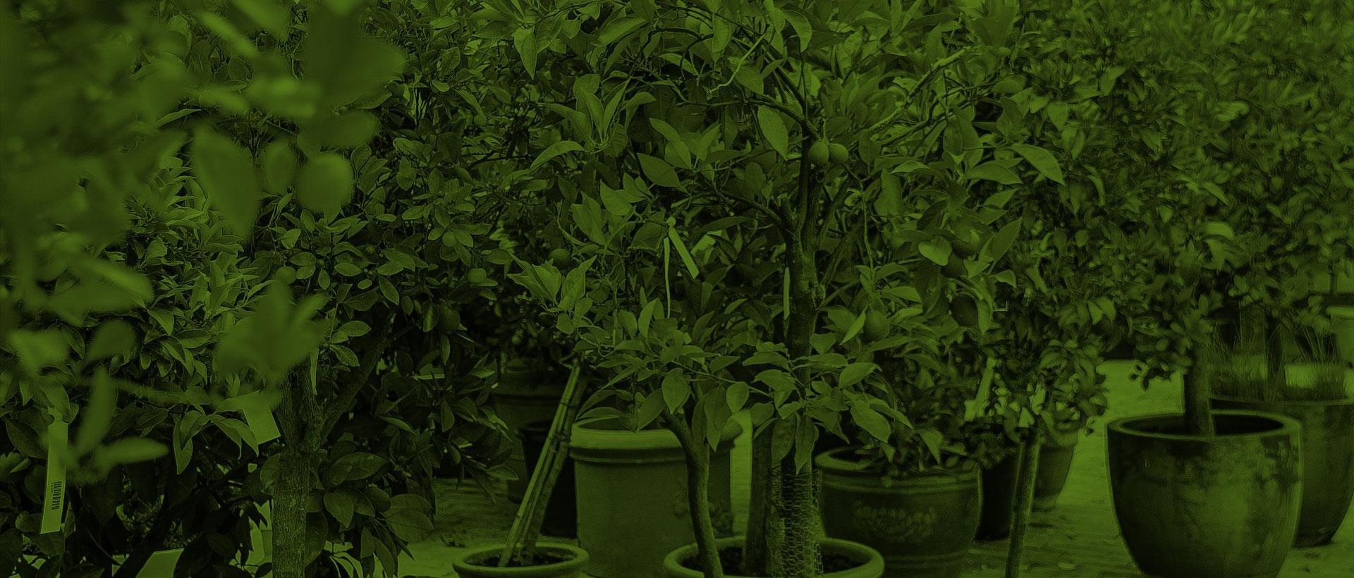Überwinterung für Ihre Pflanzen - Ihre Pflanzen in guten Händen